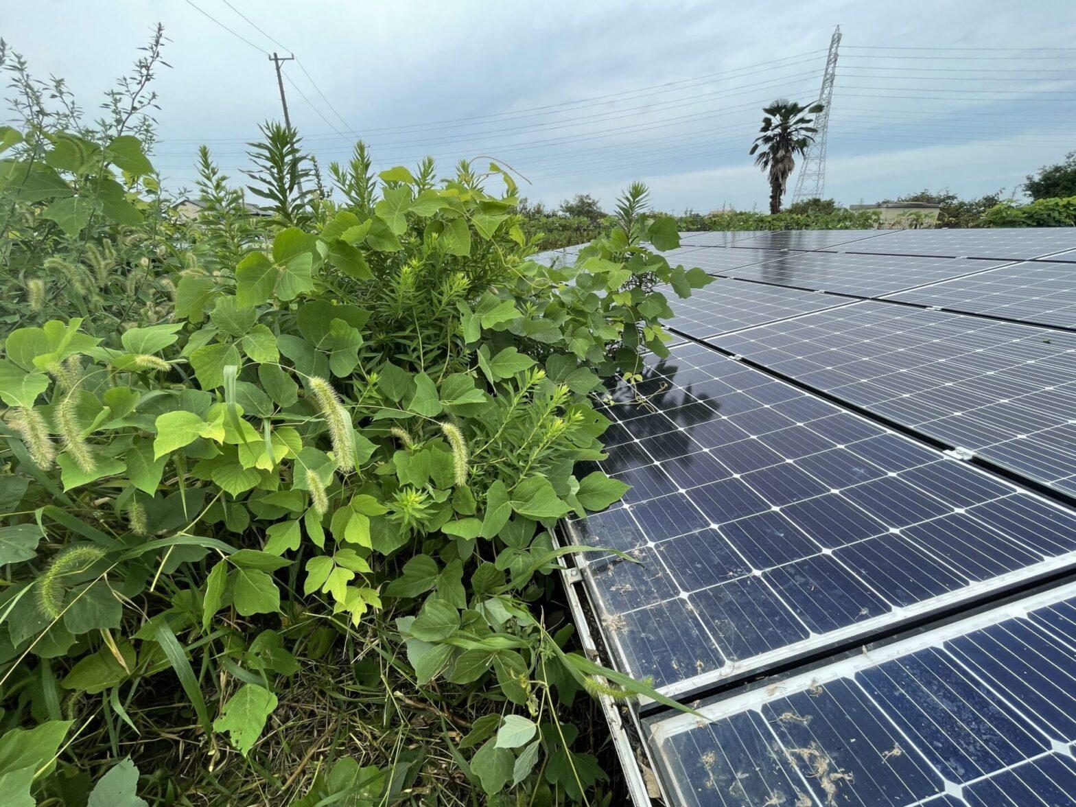愛知県あま市太陽光発電所草刈り作業