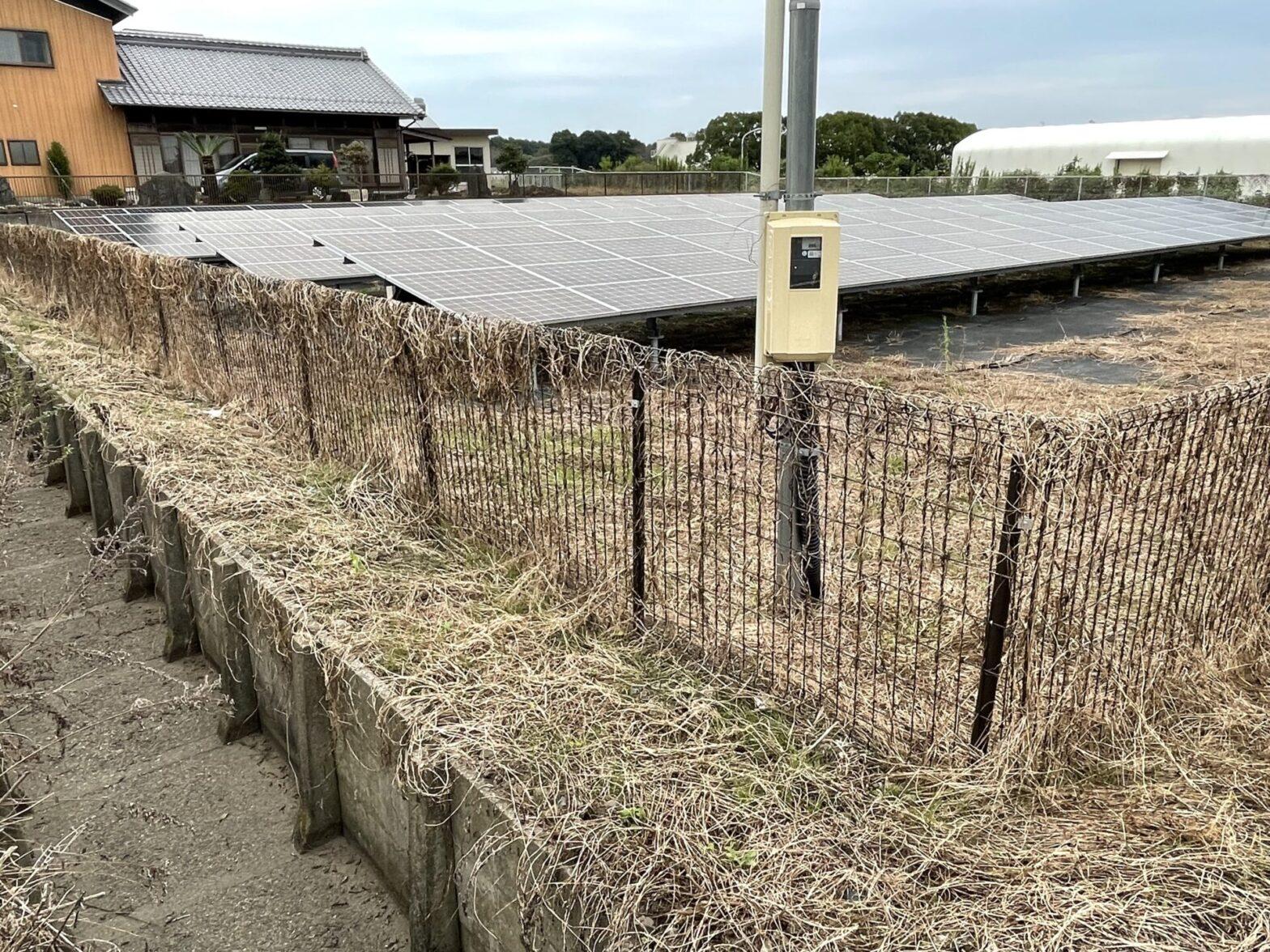太陽光発電所【除草剤散布後の雑草状況】について